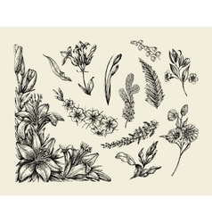 Flowers hand drawn sketch flower lily fern vector