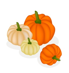 A group of pumpkins on a white background vector