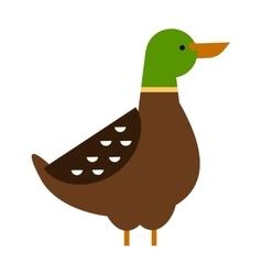 Cartoon duck farm animal character vector image