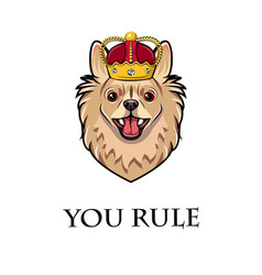 chihuahua dog wearing crown dog king vector image
