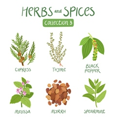 Herbs and spices collection 3 vector