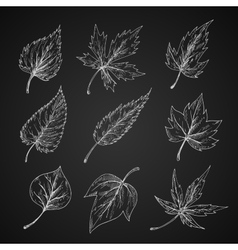 Leaves silhouettes chalk cketches set vector