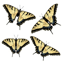 Tiger swallowtail butterfly2 vector