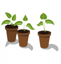 Flower seedlings vector