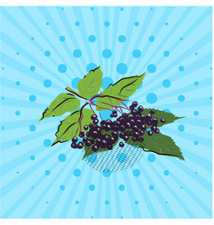 Branch with elderberries on a blue background vector