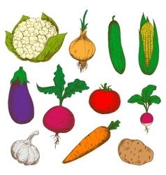 Color ripe vegetables sketches set vector image vector image