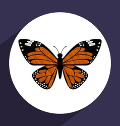 Beutiful butterfly vector