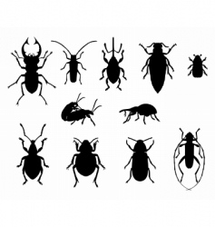collection of beetles vector image vector image