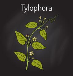 tylophora asthmatica medicinal plant vector image vector image