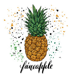 hand drawn with fresh pineapple vector image vector image
