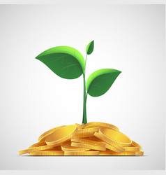 Plant with leaves on a pile of gold coins money vector