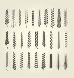 Wheat and rye spikelet collection in different sty vector
