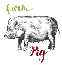 Farm pig hand drawn realistic vector
