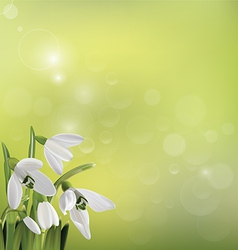 Spring snowdrop flowers on green background vector