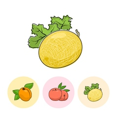 Fruit icons melon peach apricot vector