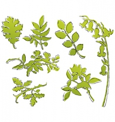 leaf sketches vector image vector image