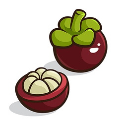 Purple mangosteen vector