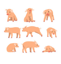 Cute little pig set funny piggy in different vector