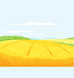 Farm field of wheat vector