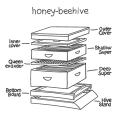 honey-beehive vector image