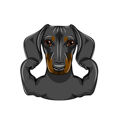 portrait of dachshund dog with muscules vector image