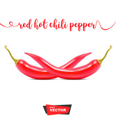 Two realistic red hot chili peppers on white vector