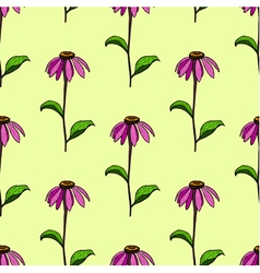 Seamless pattern from flowers echinacea vector