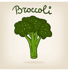 Cute of broccoli vector