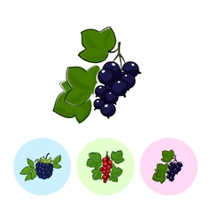 Fruit icons blackcurrant redcurrant  blackberry vector