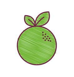 Green delicious orange fruit icon vector