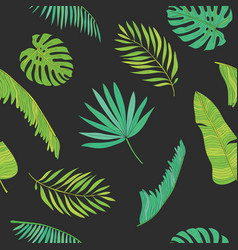 tropical palm monstera chamaedorea leaves vector image