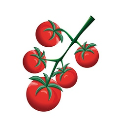 Cherry tomatoes vector