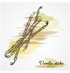 Vanilla sticks vector