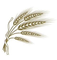 Spikelets of wheat tied with a ribbon vector