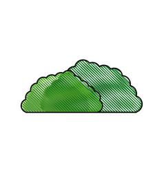 Drawing bush foliage botanic image vector