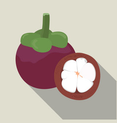 Mangosteen isolated mangosteen icon vector