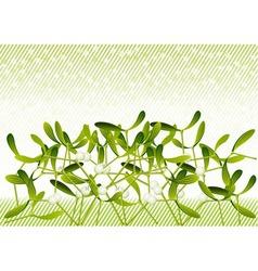 mistletoe vector image vector image