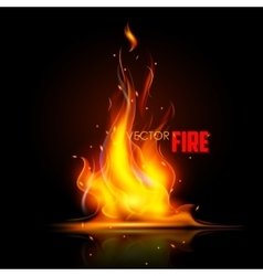 Realistic burning fire flame vector