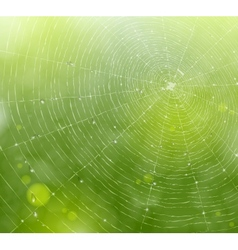 Web of natural background vector image vector image