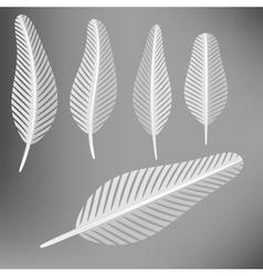 Set of grey feathers vector