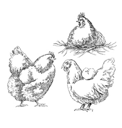 Chiken sketches vector