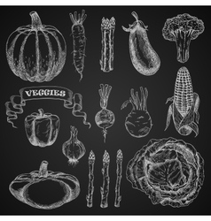 Chalk sketches of farm vegetables vector