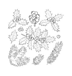 fir tree and mistletoe branches leaves berries vector image vector image