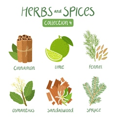 Herbs and spices collection 4 vector