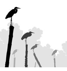 Egret perches vector