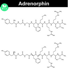 Adrenorphin molecular structure vector image vector image