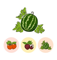 Fruit icons watermelon lichee persimmon vector