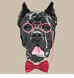 Hipster dog cane corso breed vector