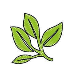 Leaves or sprout icon image vector