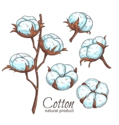 Hand drawn color cotton flowers vector
